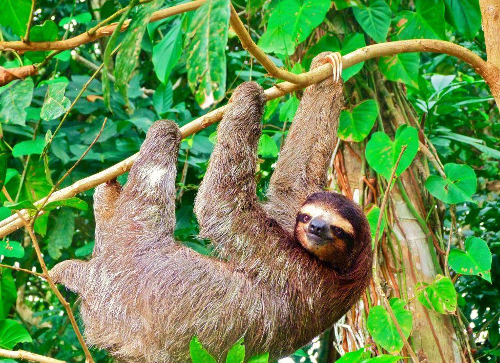 Lustrumreis Costa Rica Midden-Amerika Cahuita