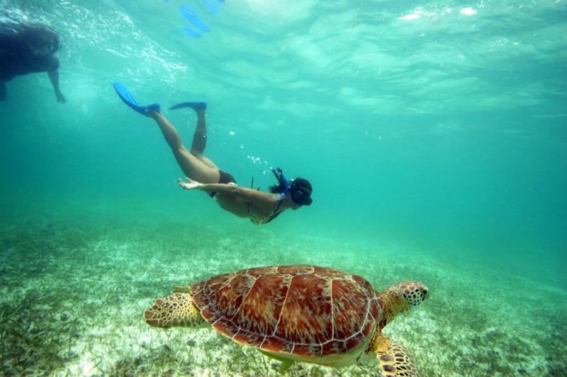Lustrumreis Mexico Akumal Schildpadden