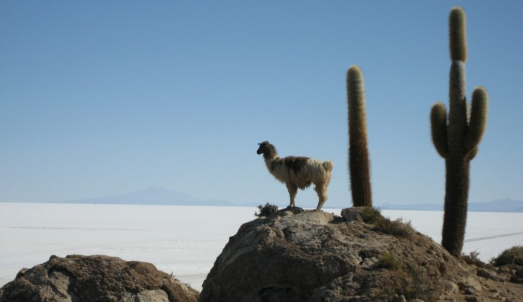 lustrumreis Peru Bolivia