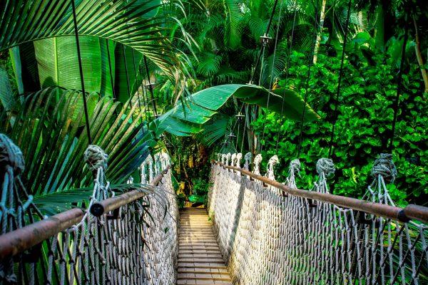 Amazone Jungle – Iquitos