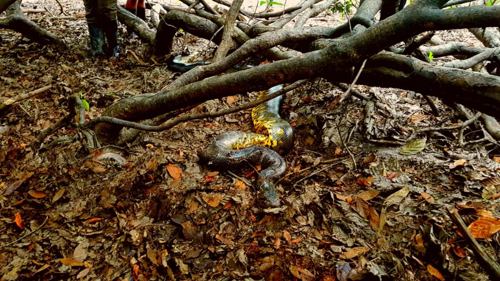 Lustrumreis Ecuador Cuyabeno Animals 2