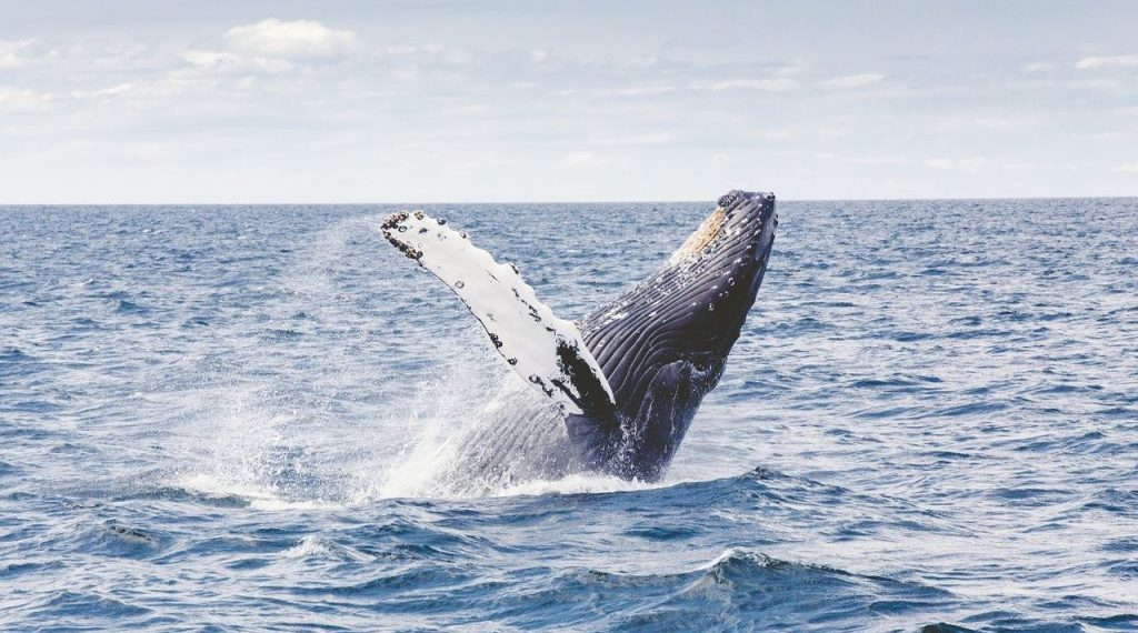 Lustrumreis walvis 123