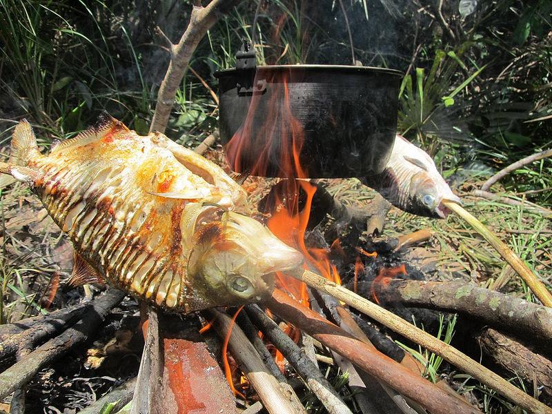 Lustrumfiesta-Colombia-Lustrumreis-Jungle-Amazone-visje