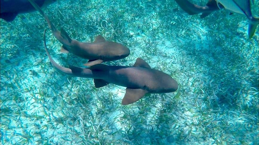 Lustrumreis Belize Caye Caulker Snorkelen
