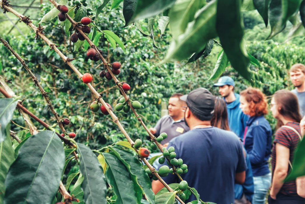 Lustrumreis Colombia Hacienda Venecia Koffie tour Anne