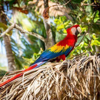 Lustrumreizen Costa Rica
