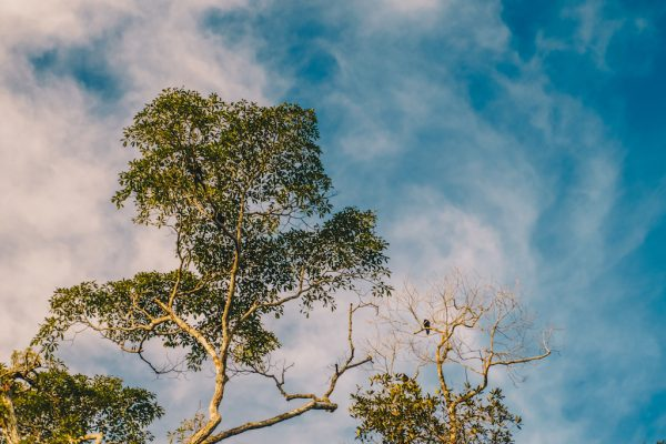 Lustrumreis Ecuador Cuyabeno Amazone 24