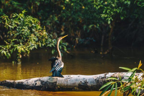 Lustrumreis Ecuador Cuyabeno Amazone 5