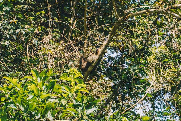 Lustrumreis Ecuador Cuyabeno Amazone 7