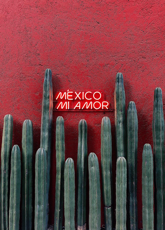Lustrumreis Mexico CDMX