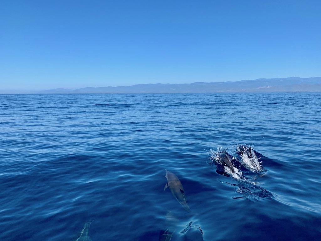 Lustrumreis Mexico Puerto Escondido Dolfijnen Tour