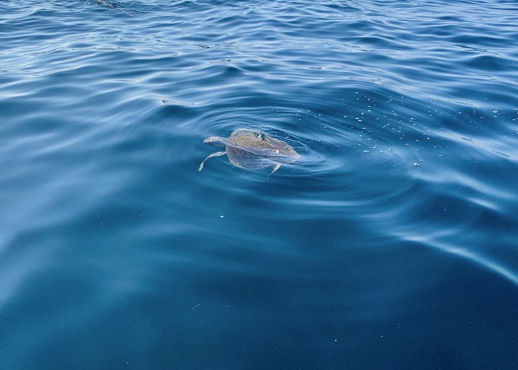 Lustrumreis Mexico Puerto Escondido Dolfijnen Tour schildpad