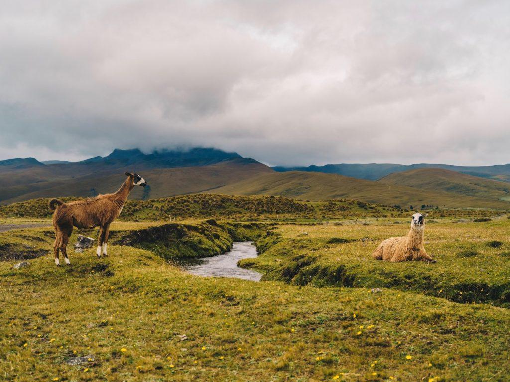 cotopaxi downhill lama