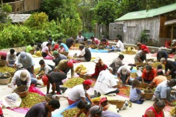 Nicaragua lustrumreis koffieplantage