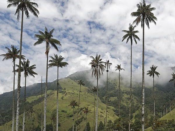 Bezoek Valle de Cocora tijdens je lustrumreis naar Colombia