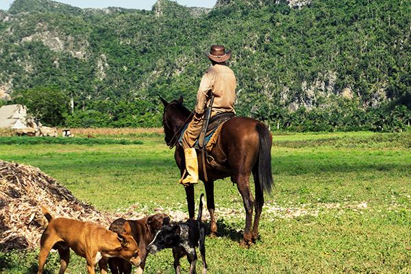 Lustrumreis-Cuba-Paardrijden