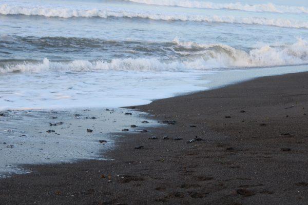 lustrumreis-guatemala-elparedon-schildpadjes
